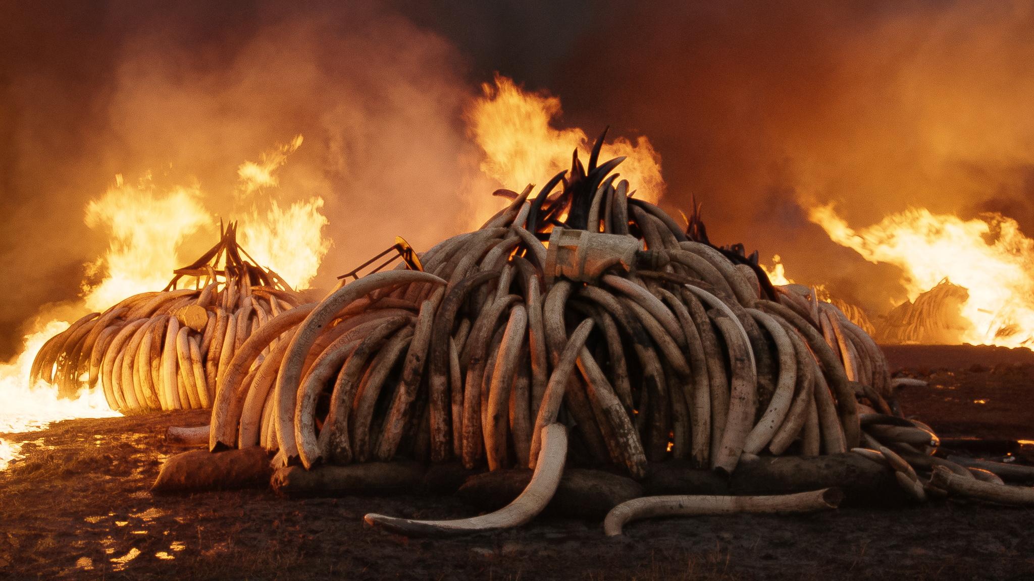 "Scene from film ""Anthropocene"""