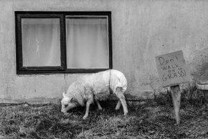 Scene from Lamb